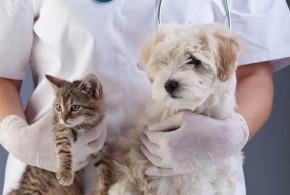 Tipps und Hilfe für den Tierarztbesuch