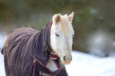 abschwitzdecke-pferd