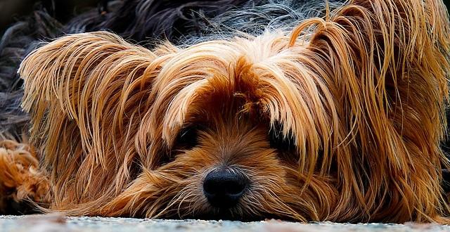 Alles über Allergietests für Hunde