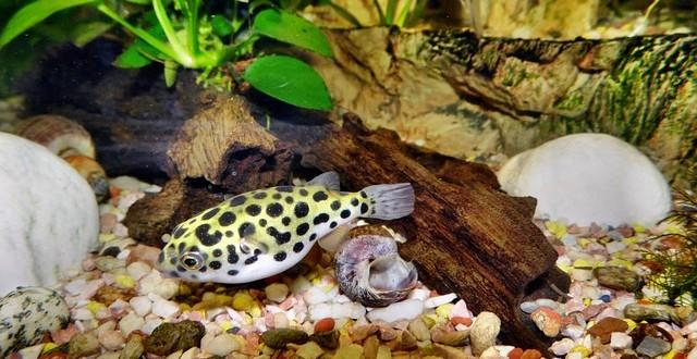 kleines Aquarium
