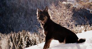 Bild Hund im Schnee