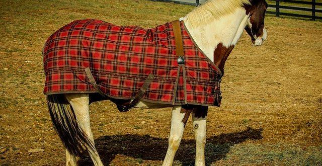 Pferdedecken