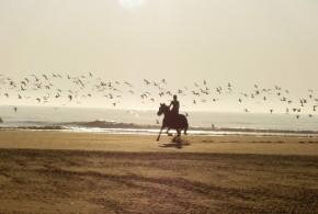 Pferdetipps für das erste eigene Pferd - Bild: Pixabay.com