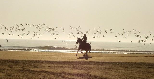 Das eigene Pferd – das sollten Sie vor dem Kauf beachten