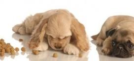 Diätfutter für Hunde