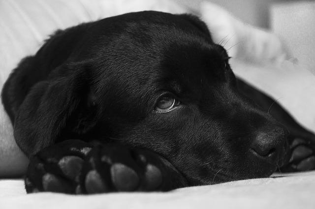 Anzeichen für einen Giftköder beim Hund