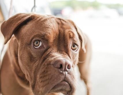Tipps zu Hundefutter