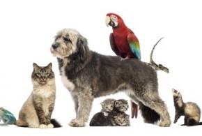 Haustiere online kaufen