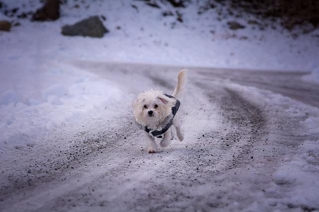 Hundepfoten vor Eis richtig schützen