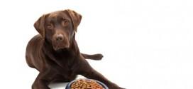 Inhaltsstoffe im Hundefutter