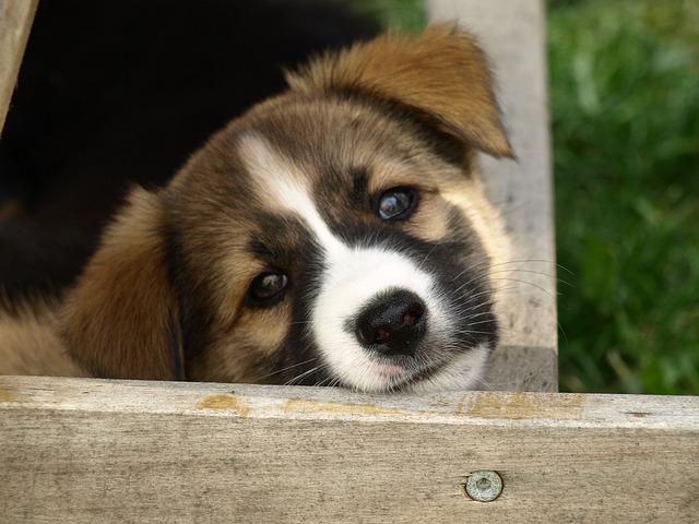 Hundename auswählen