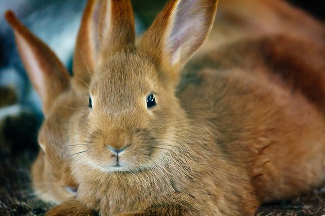 Brauchen Kaninchen viel Platz?