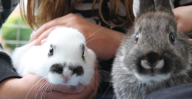 Kaninchenhaltung in der Wohnung