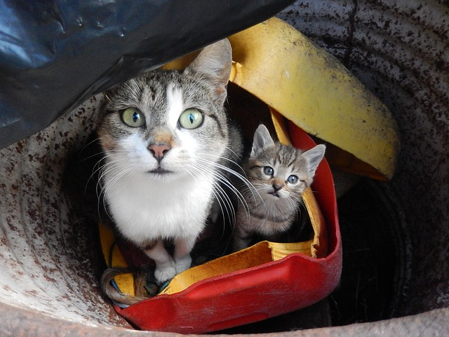 katzen zuchten mit spiele kostenlos anmelden