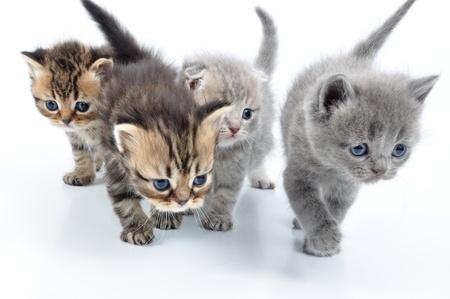 Einrichtung für Katzen