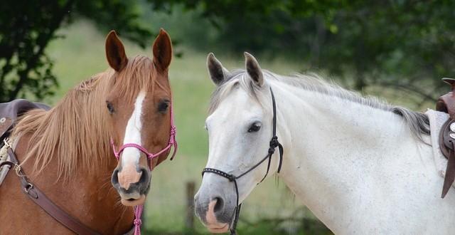 Was Sie beim Kauf eines Pferdes beachten müssen