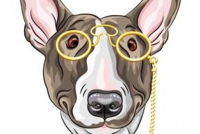 Online Shops für Ihre Haustiere