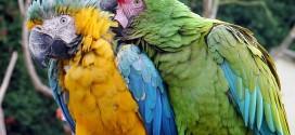 Papageienkäfig für Zwei
