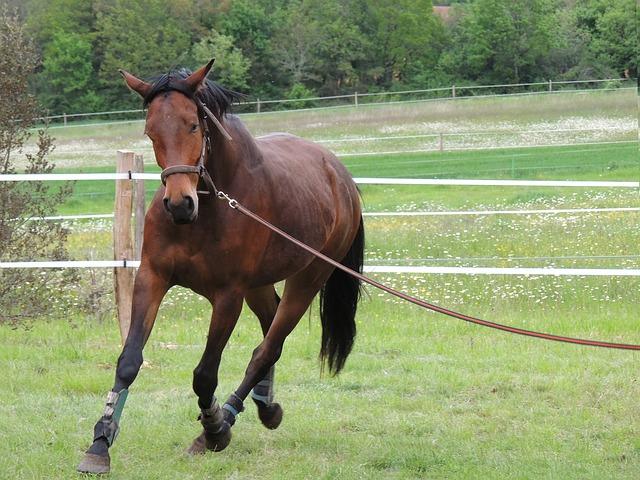 Pferd an der Lounge