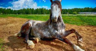 pferd gymnastik rücken