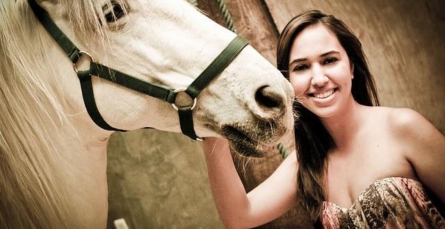 Wie lernen Pferde Zirkuslektionen?