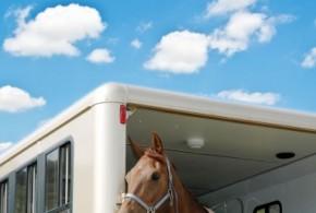 Pferdetransport im Anhänger