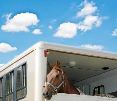 So transportieren Sie Ihr Pferd richtig