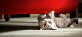 Tipps zur Katzenhaltung