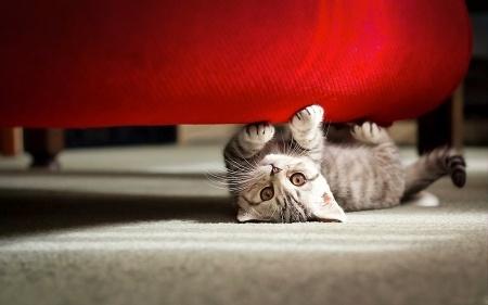 Sicherheit für Ihre Katze