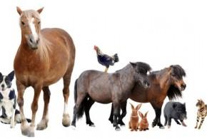 Ist die Tierhalterhaftpflicht-Versicherung Pflicht?