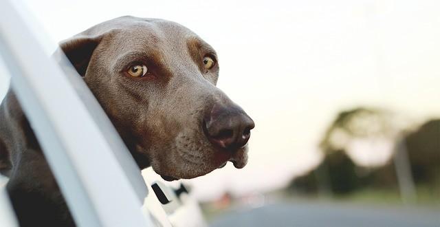 Tipps für Hundehalter: Diese Versicherungen benötigen Sie