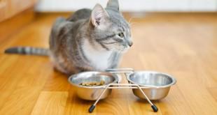 Was dürfen Katzen nicht fressen