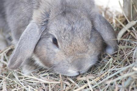 die artgerechte haltung von kaninchen in der wohnung. Black Bedroom Furniture Sets. Home Design Ideas
