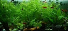 aquarium-323717_1280