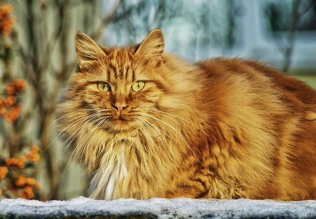 Katzennamen finden