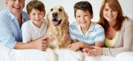 Tipps für das erste Haustier