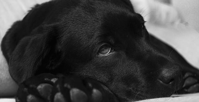 Häufig auftretende Hundekrankheiten