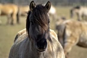 wild-horse-104621_640