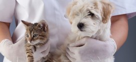 Tipps für den Tierarztbesuch