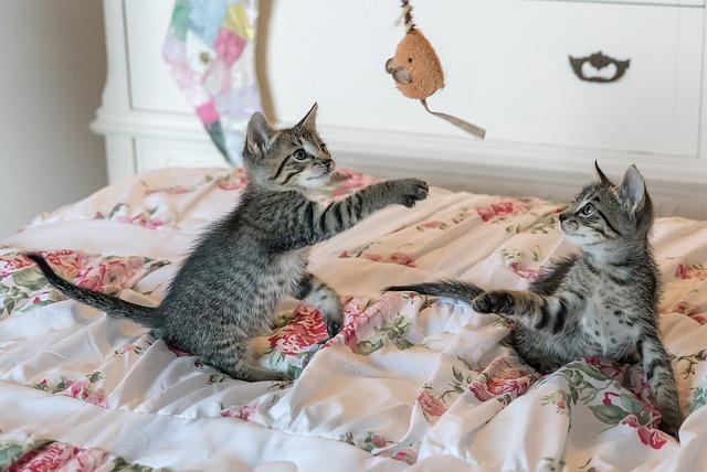 ab wann spielen katzen. Black Bedroom Furniture Sets. Home Design Ideas