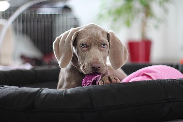 Bild Hund mit Handtuch