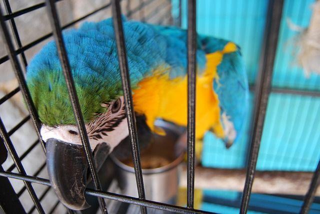 Bild Käfighaltung Papagei