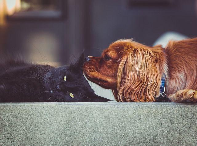 Bild Katze und Hund