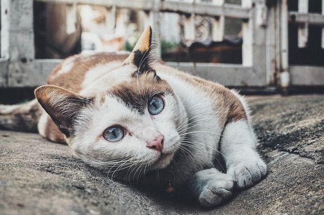 Bild Katze und Katzenhaare