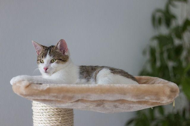Bild Katzenkratzbaum