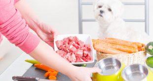 selbstgekochtes Hundefutter