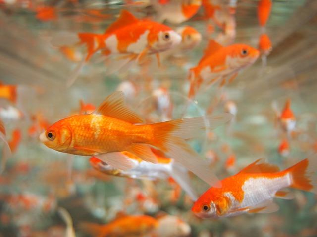 Fische richtig füttern