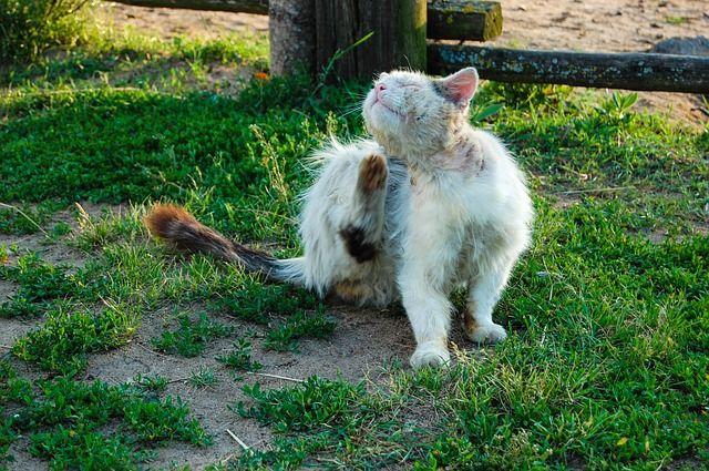 Haarausfall Katze