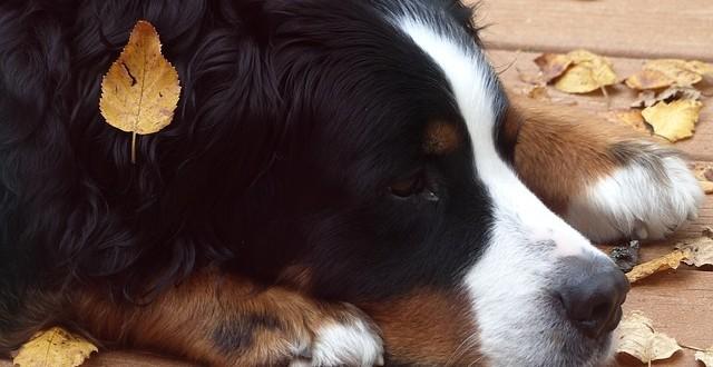 Hundehaltung im Herbst und Winter