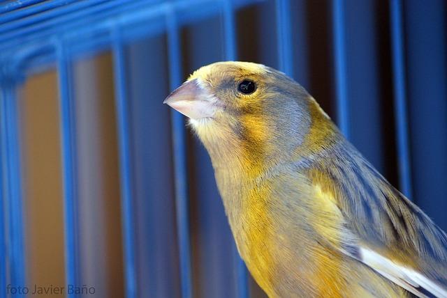 Käfige für Kanarienvögel